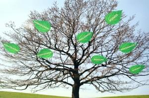drevo malo